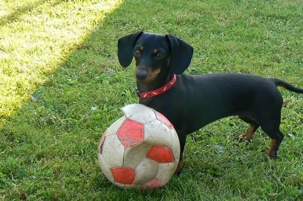 Fanny fotbalistka