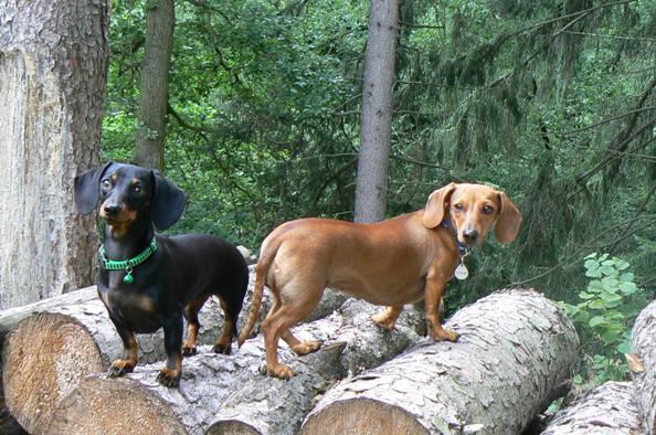 Fanny a Nelly v lese